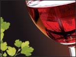 festival-slovenskych-vin.jpg